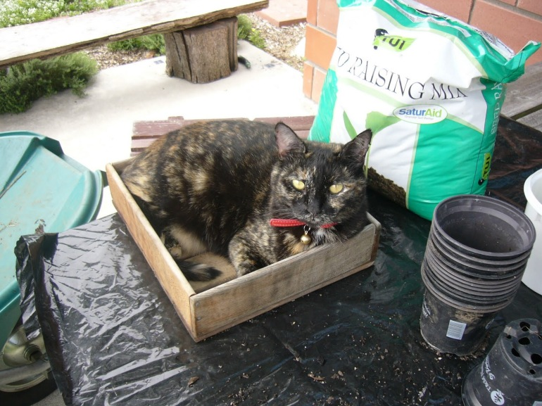 My Cat Definitely Loves Boxes! Even seedling boxes!