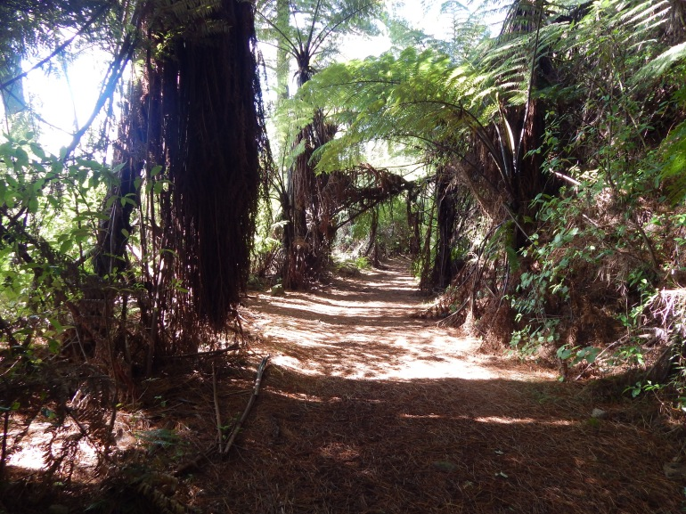 Sun-dappled walkway between New Zealand Natives.