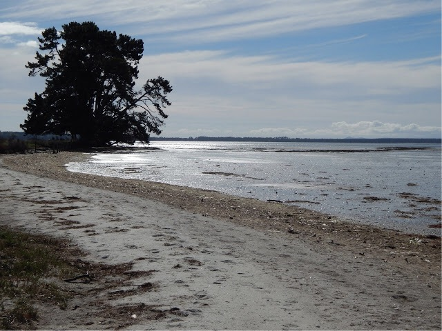 Tauranga Moana, with Matakana Island in the distance